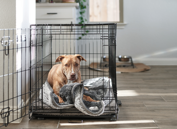 The Pet Parents® Guide to Pet Blankets