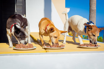 Ways to Enhance Your Dog's Diet