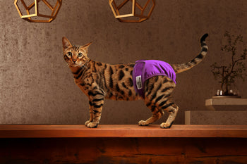 Cat Diapers and Things Needed When Traveling With a Cat