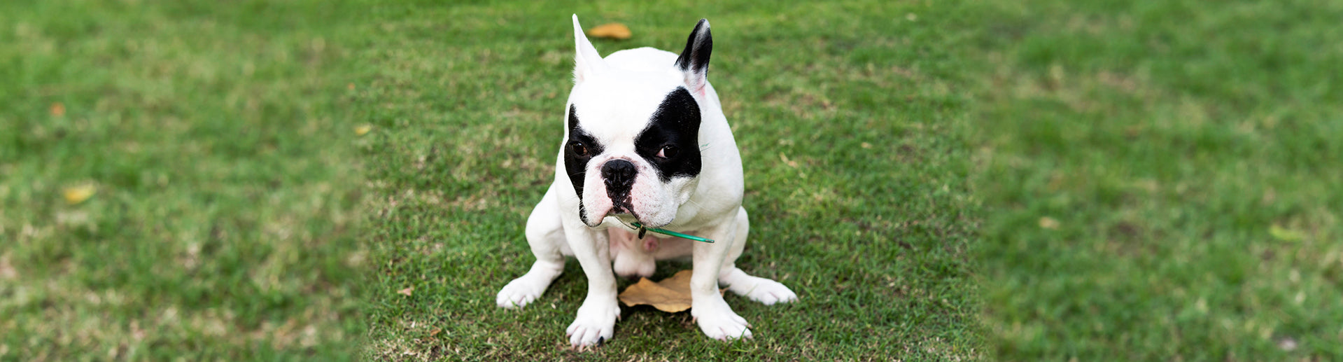 Lack of Bowel Control in Dogs