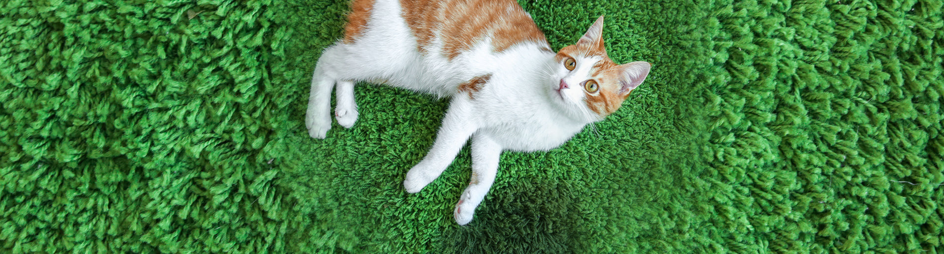 Why Inappropriate Peeing Happens Outside the Litter Box
