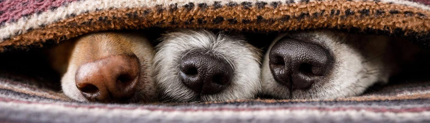 Holiday Ready: What To Do For Your Pets