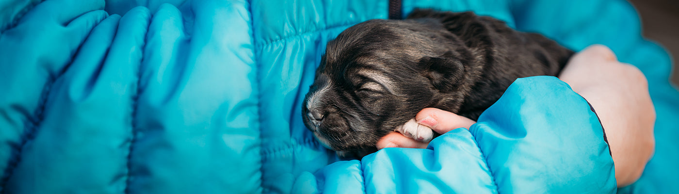 How to take care of a weak newborn pup