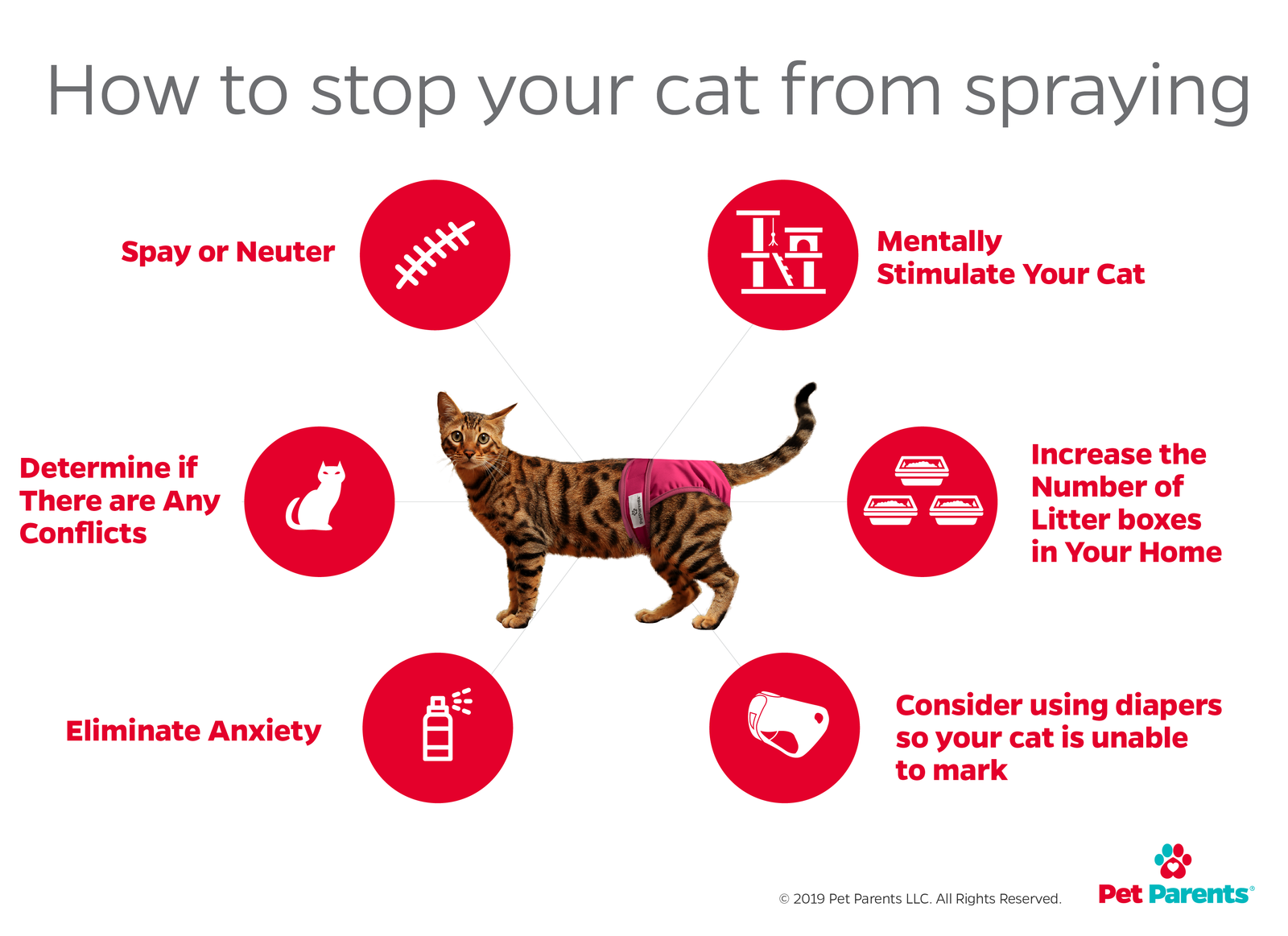 can you stop a female cat from spraying