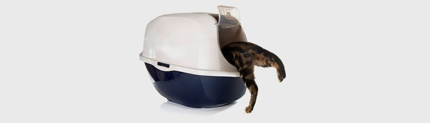 Training cats to pee in the litter box