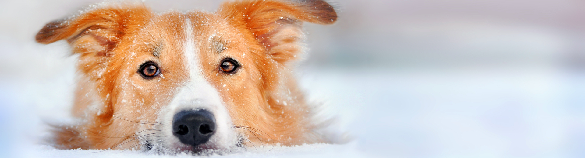 Pet Friendly Tips to be Holiday Ready