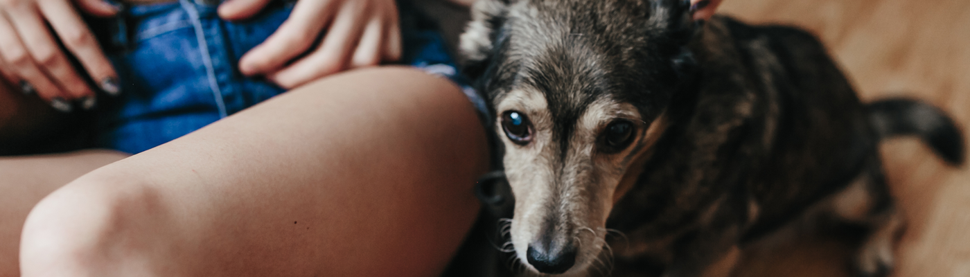 How to Recognize Mental Illnesses in Dogs
