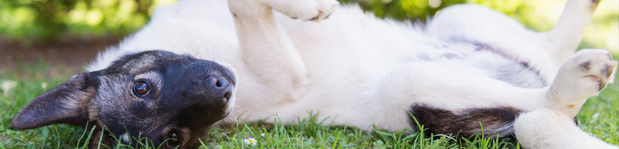 Diseases Your Dog Can Get Outside
