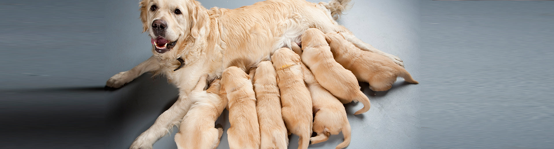 How Can I Tell if My Dog is Ready to Breed?