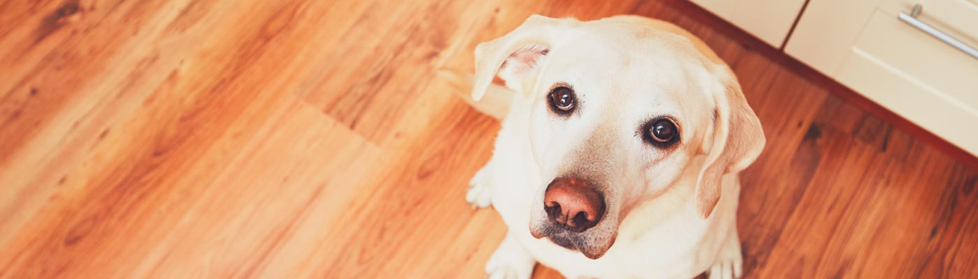 Cranberry and Your Pet's Urinary Health