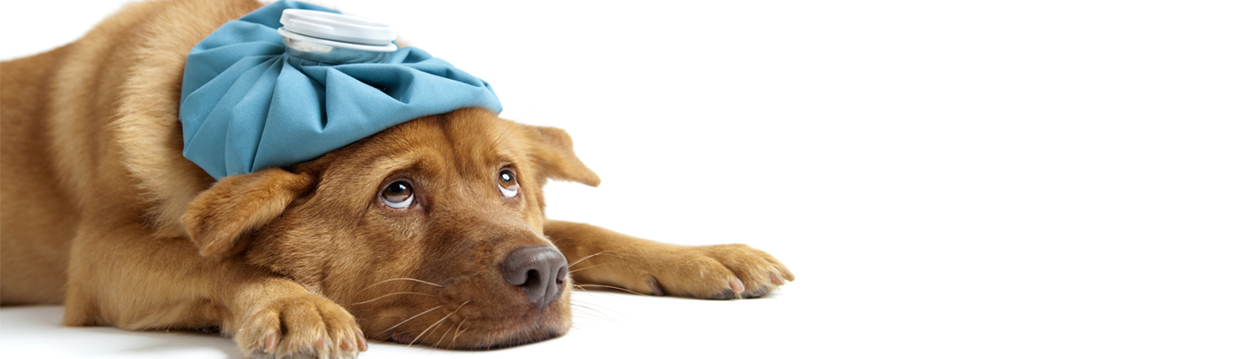 Preparing for Battle: Cancer in Dogs