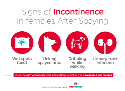 Is Your Dog Suffering from Incontinence After Spaying?