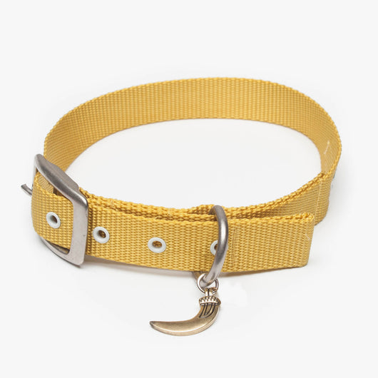 The Standard Plus - Large Collar
