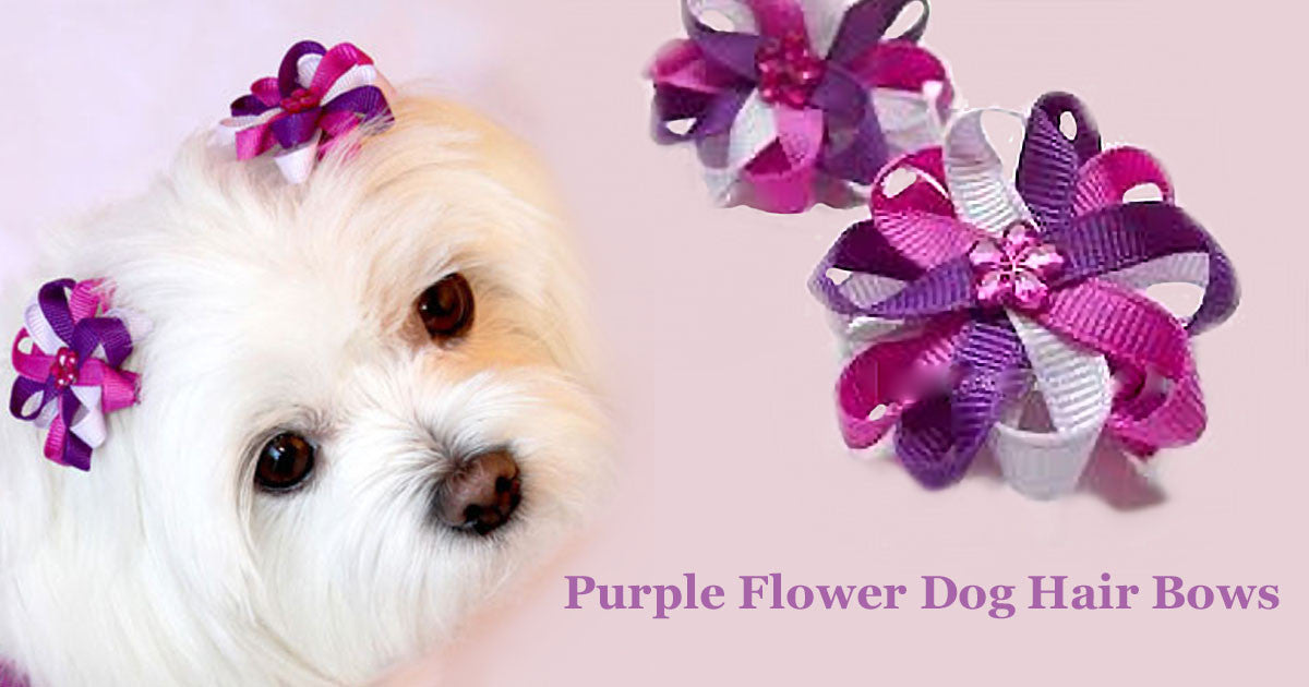 Dog Accessories & Grooming Tips from a Miami Pet Boutique
