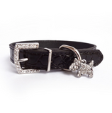 Charm Croc Dog Collar - Miami Pooch Pet Boutique