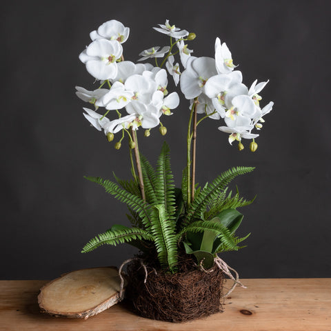 Large White Orchid And Fern Garden In Rootball Artificial Plant Plastic -White
