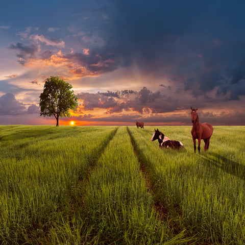 Horse in field image