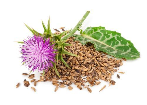ORGANIC CRACKED MILK THISTLE SEED