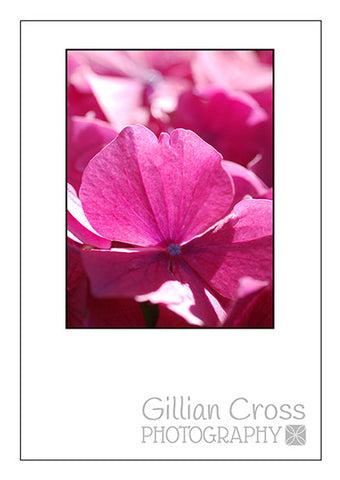 Blank Card Hydrangea - Rock Paper Bears
