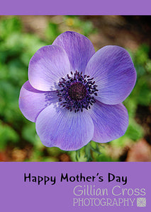 Happy Mother's Day Anemone Card - Rock Paper Bears