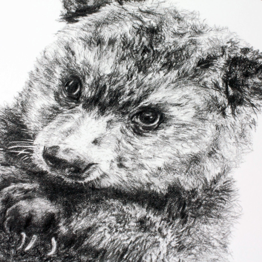 close up on baby bear pencil drawing