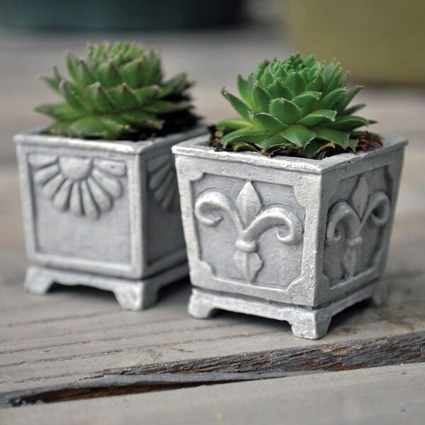 Fiddlehead Classic Square Planters, Set of 2