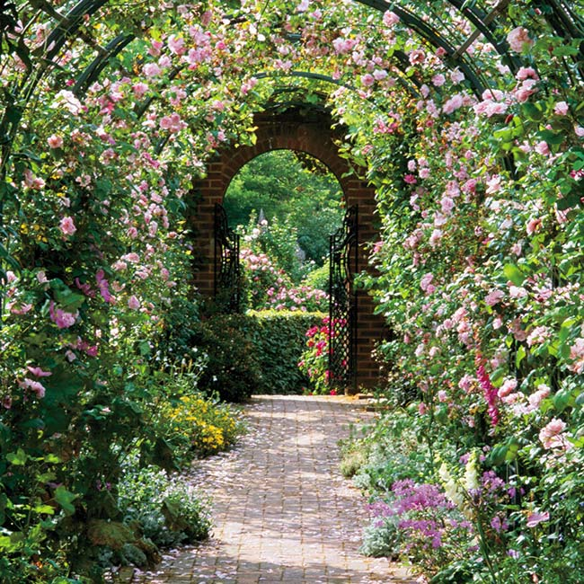 Floreo Card - Rose Arch