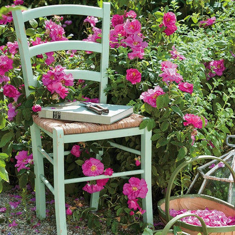 Floreo Card - Chair and Rosa Gallica