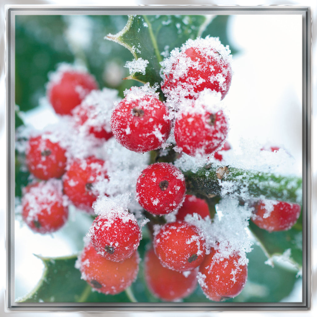 'Christmas Botanical' Box of 12 Christmas Cards