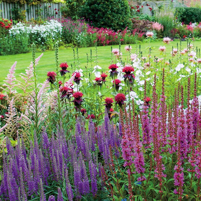 Floreo Card - Herbaceous Borders