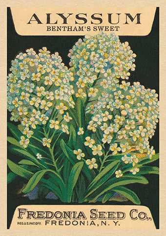 The Art Press Greeting Cards - Benthams Sweet Alyssum