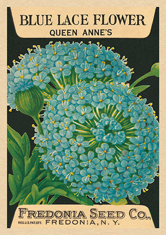 The Art Press Greeting Cards  - Queen Anne's Blue Lace Flower