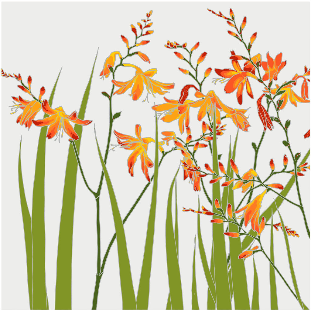 Umbellifer Crocosmia  greeting card