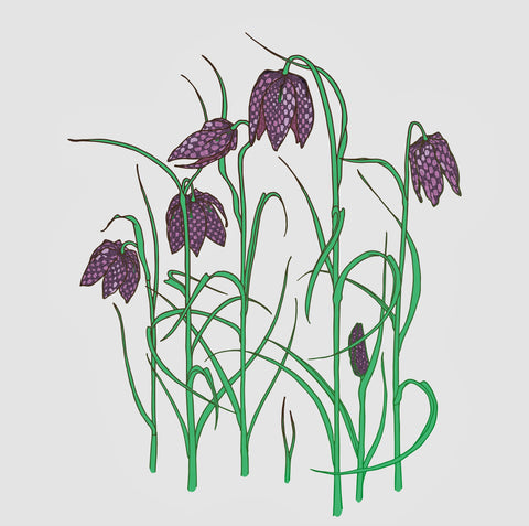 Umbellifer Fritillaries  greeting card