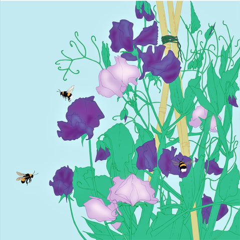 Umbellifer Sweet pea with Bee  greeting card
