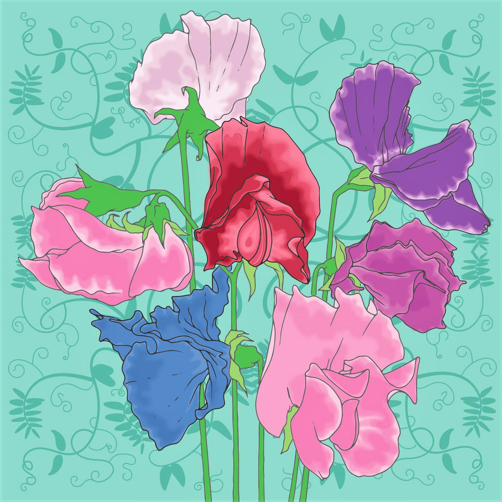 Umbellifer Annual Sweet pea  greeting card