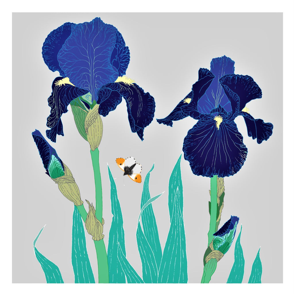 Umbellifer Greeting Card Tall Bearded Iris with Orange Tip Butterfly