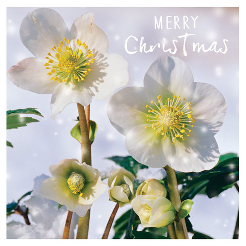 Christmas Card - Floral photos