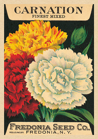 The Art Press Greeting Cards - Carnation