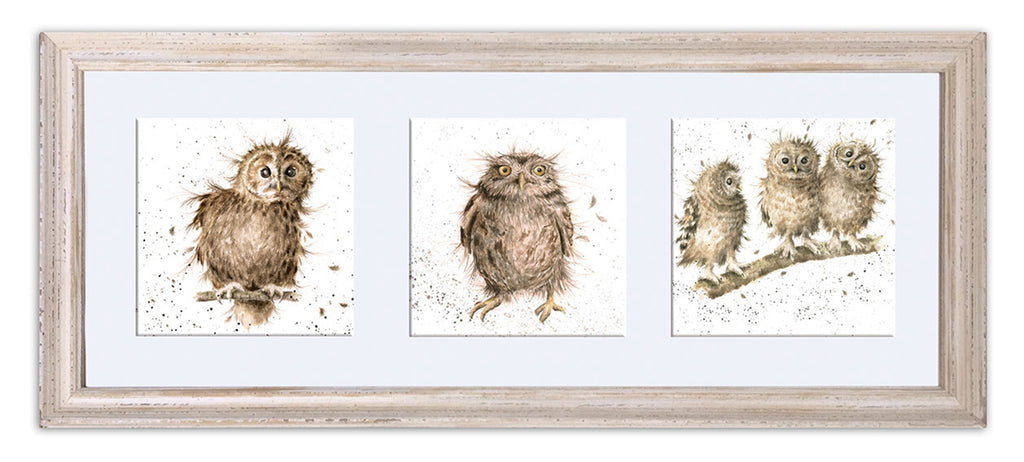 Picture - A Trio Of Owls