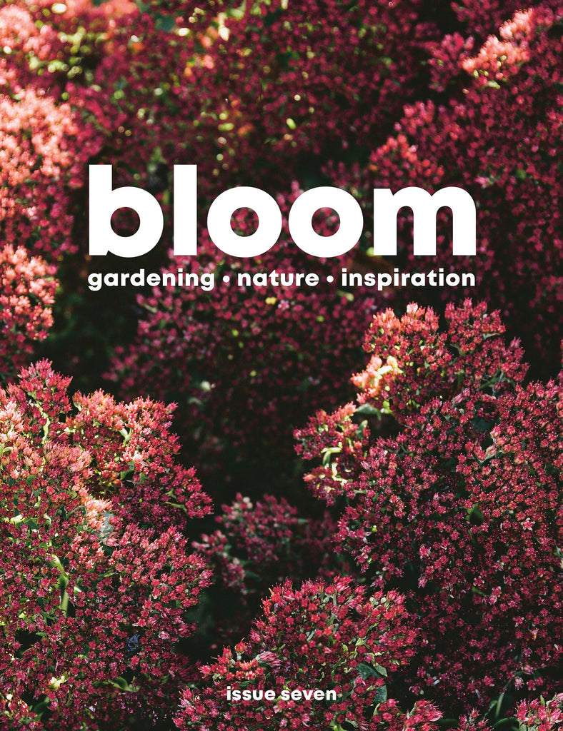 Bloom Magazine Issue 7