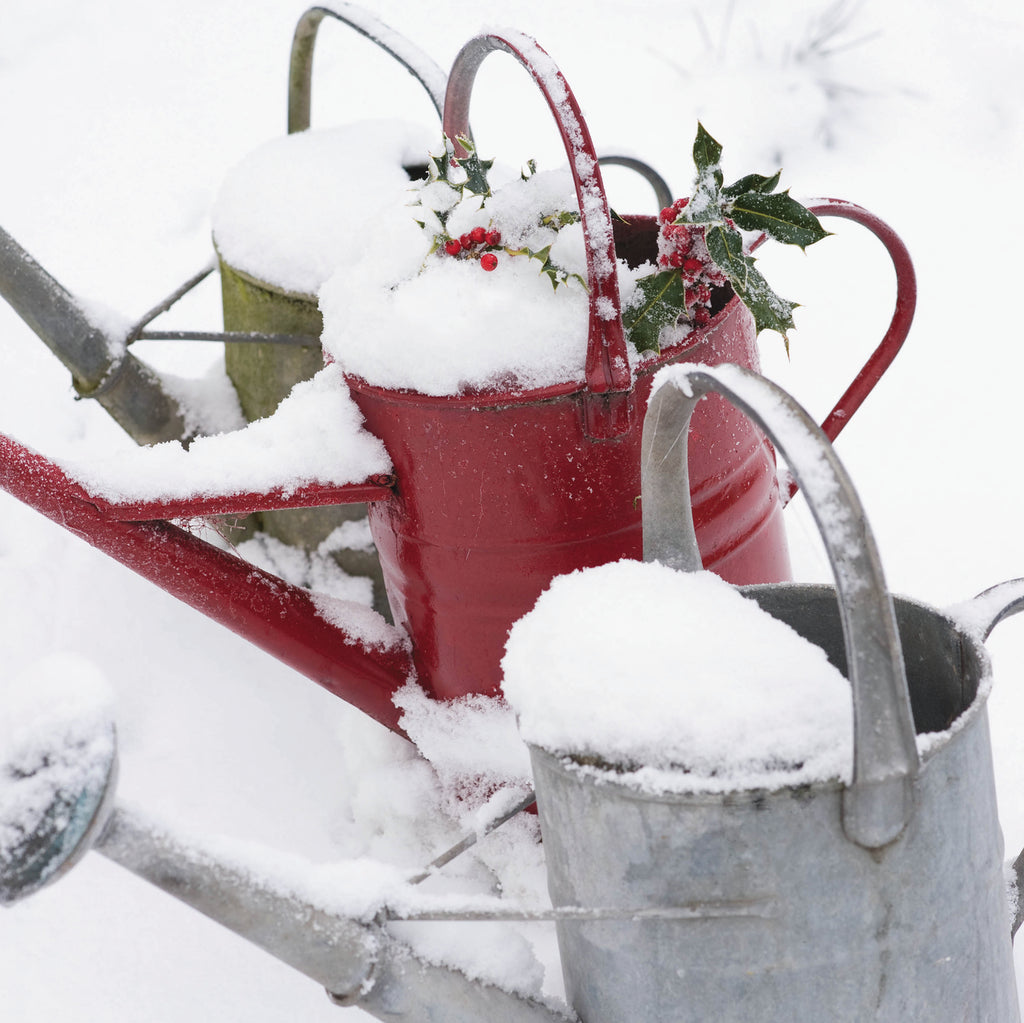 Watering cans & Holly sprigs Single Christmas Cards