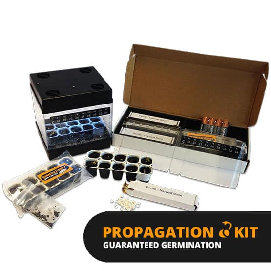 Propagation Kit (10 pack) - Harvest Soon
