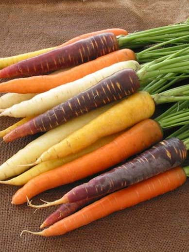 CARROT RAINBOW MIX