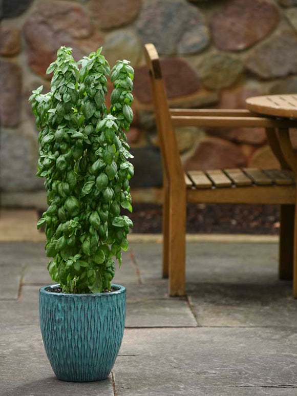 BASIL EVERLEAF EMERALD TOWER