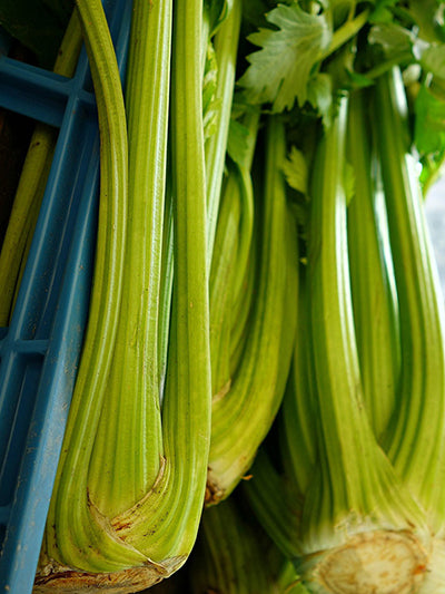 Celery Giant Golden Pascal