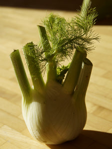 FENNEL SWEET FLORENCE