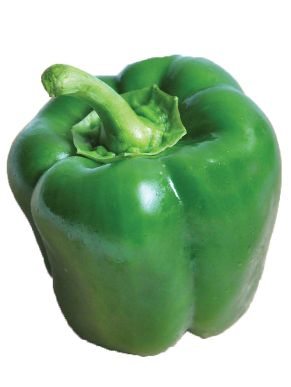 CAPSICUM CALIFORNIA WONDER