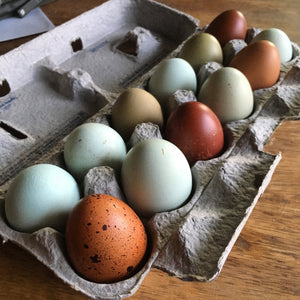 Pasture Raised Chicken Eggs - 1 Doz