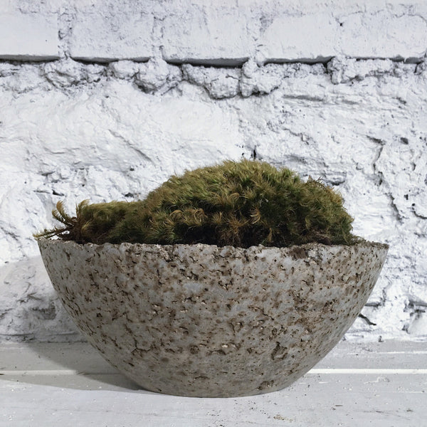 Large Moss Plant in Hand Made Planter